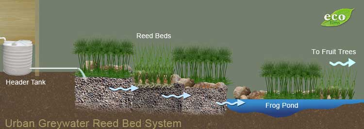 How To Build A Reed Bed Filtration System